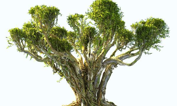 japanese tree forest 3D model