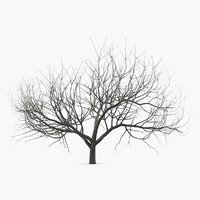 small winter tree 3D model