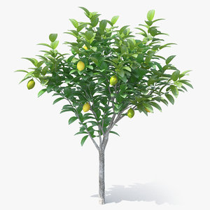 3D small lemon tree