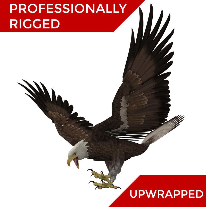 3D bald eagle rigged modelled model
