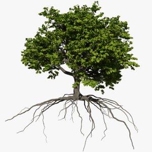 3D oak summer 4 tree model