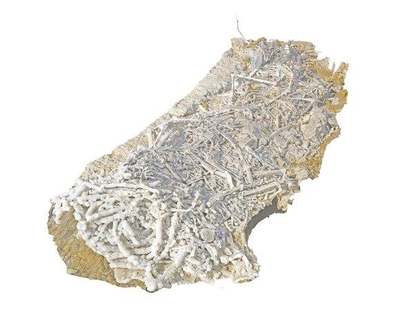 dead sea roots salt model