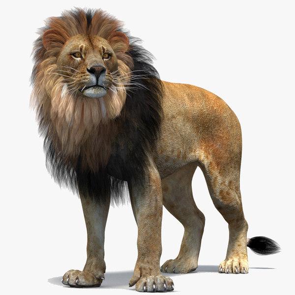 lion 2 rigged polygonal 3D model