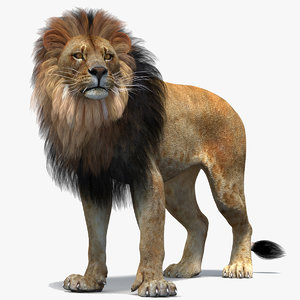 lion 2 rigged polygonal 3D model