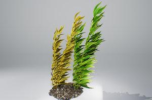 3D kelp brown pbr