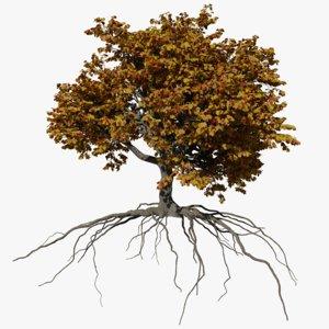 3D oak autumn 4 tree