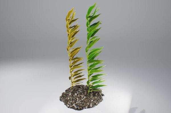 seaweed plant nature 3D model