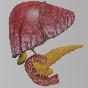 3D anatomy pancreas gall bladder
