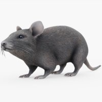 rigged mouse 3D model