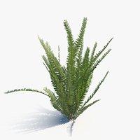 3D model scan fern