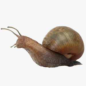 3D rigged snail
