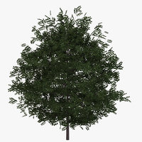 3D model buxus bush