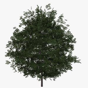 3D model buxus bush