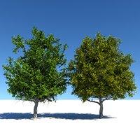 3D generic trees model
