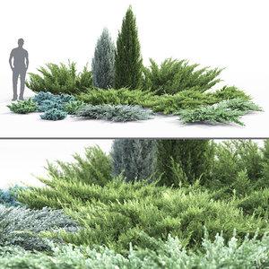 3D juniper juniperus 01