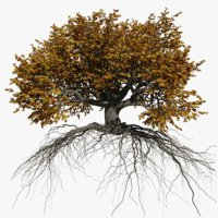 oak autumn 5 tree 3D model