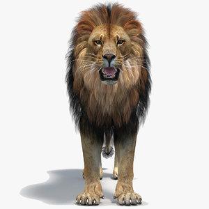 3D lion 2 polygonal mane
