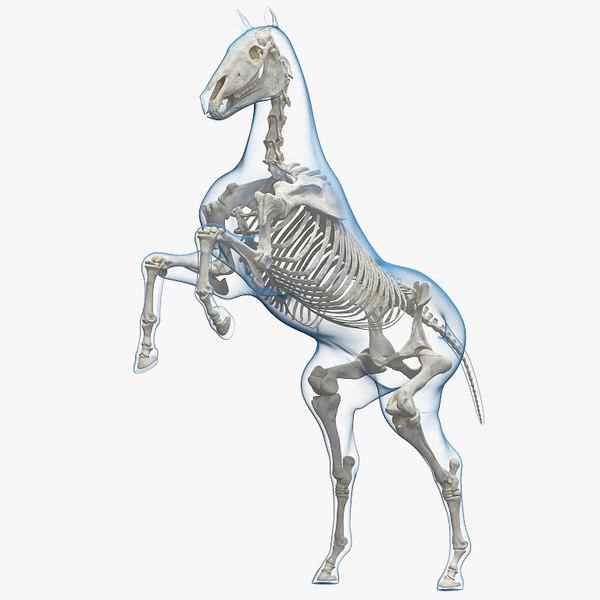 horse envelope skeleton rigged model