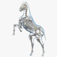 horse envelope skeleton rigged model