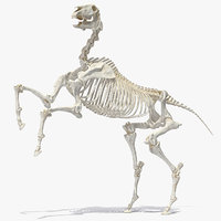 Horse Skeleton Rigged for Cinema 4D 3D Model