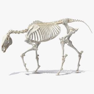 3D horse skeleton rigged model