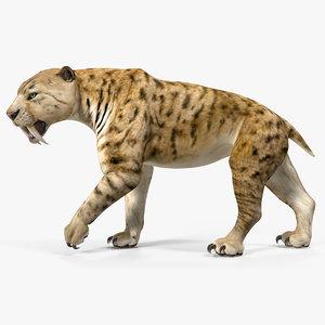 3D model saber tooth tiger rigged