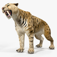 3D saber tooth tiger rigged