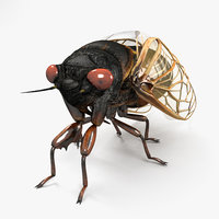 3D cicada insect bug model