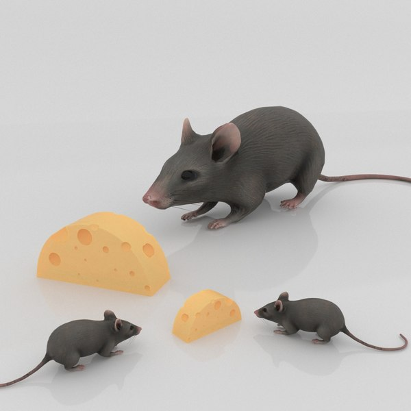 mouse cheese model