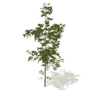 big forest tree 3D model