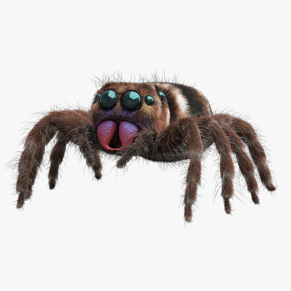 jumping spider 3D model