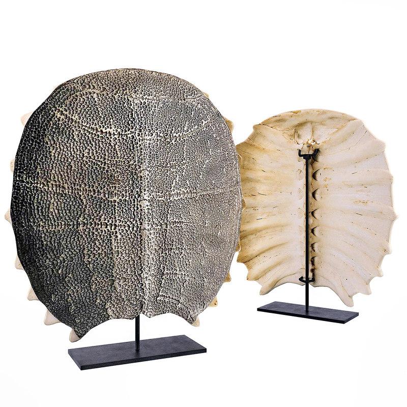 freshwater turtle shell 3D model