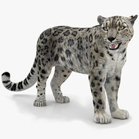 3D snow leopard 2 rigged
