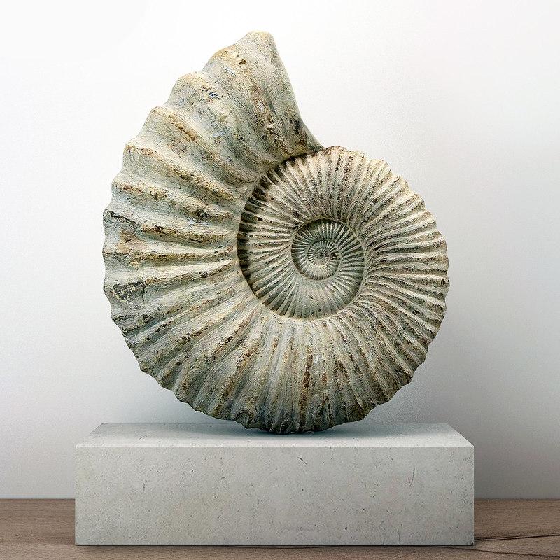 large ammonite mounted limestone 3D model