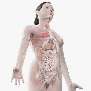 3D model female anatomy organs