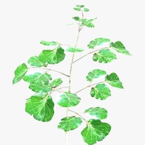 ornamental plant model