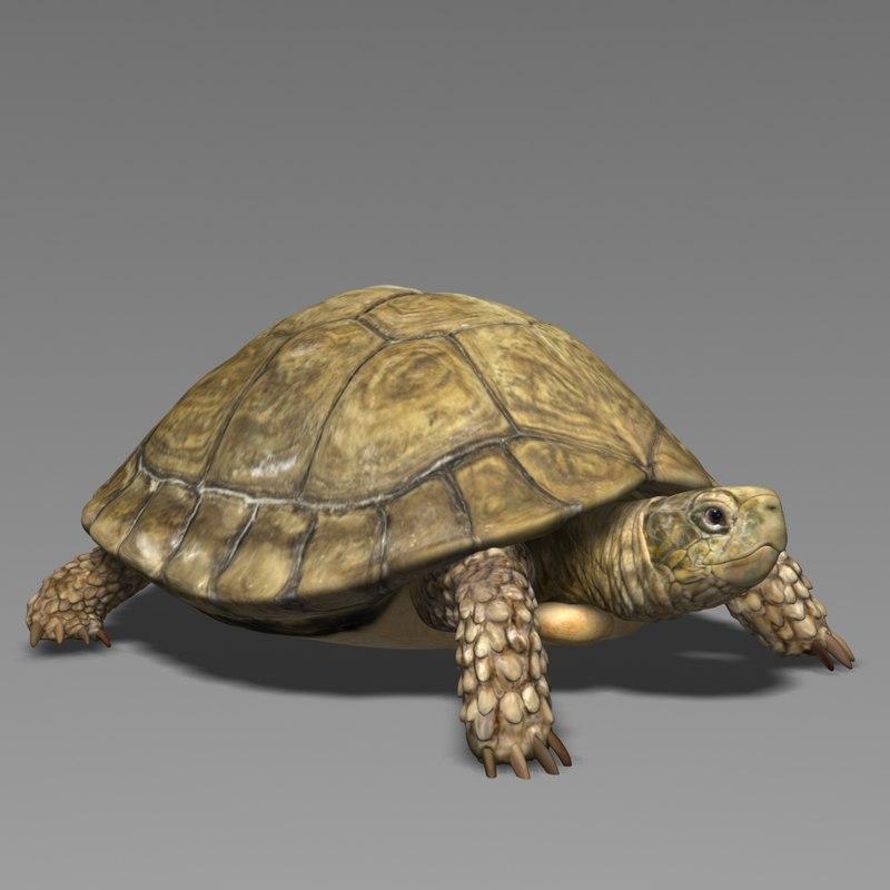 3D model turtle realistic