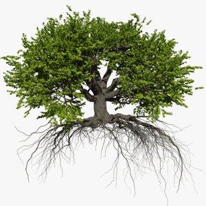 oak summer 6 tree 3D
