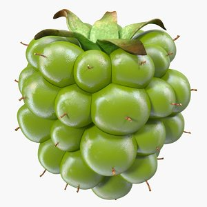 unripe green blackberry 3D model