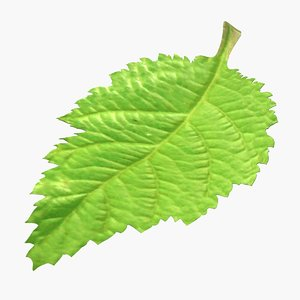 blackberry leaf 3D model