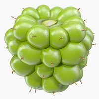 unripe green blackberry fruit 3D model