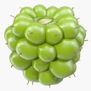 unripe green blackberry fruit 3D model