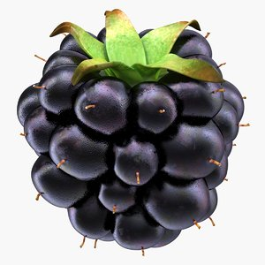 blackberry edible fruit 3D model