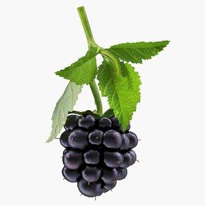 blackberry leaves 3D model