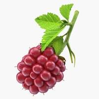3D ripe berry blackberry leaves model