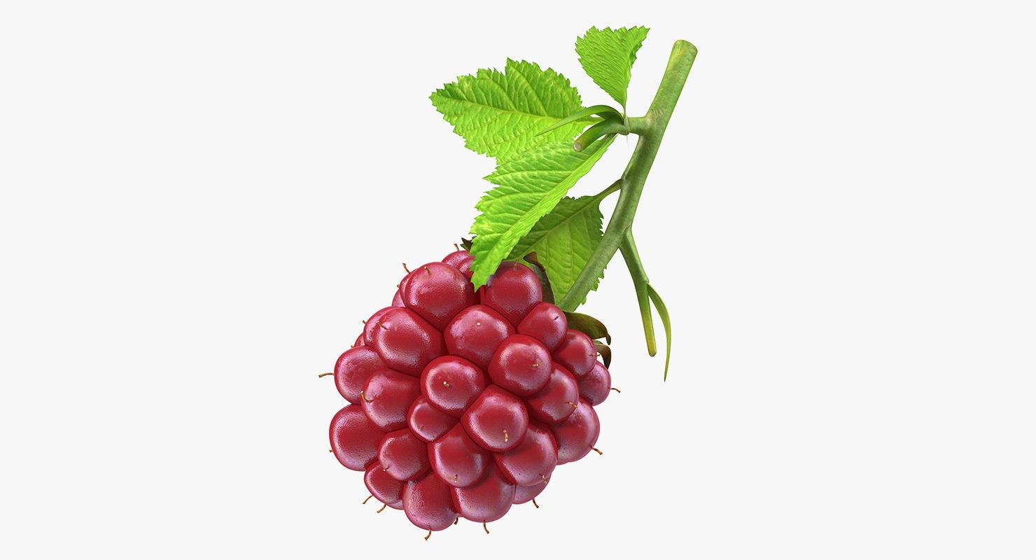 3D ripe berry blackberry leaves model