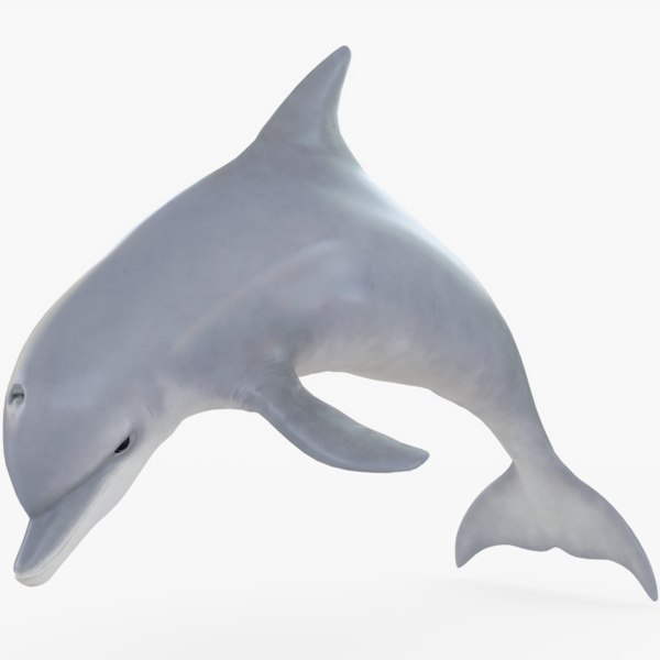 3D dolphin rigged model