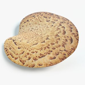 3D pheasant mushroom