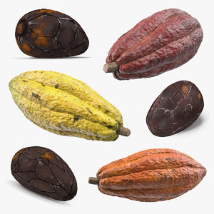cacao fruits beans 3D