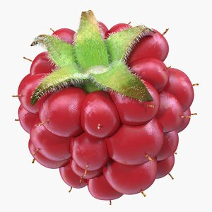 ripe berry blackberry fur 3D model